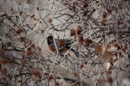 Spring Migratory Bird Count