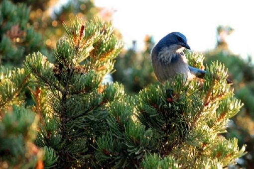 Audubon Christmas Bird Count
