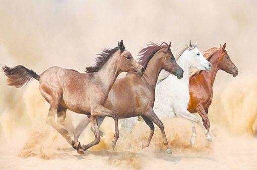 Equestrian Training Sessions