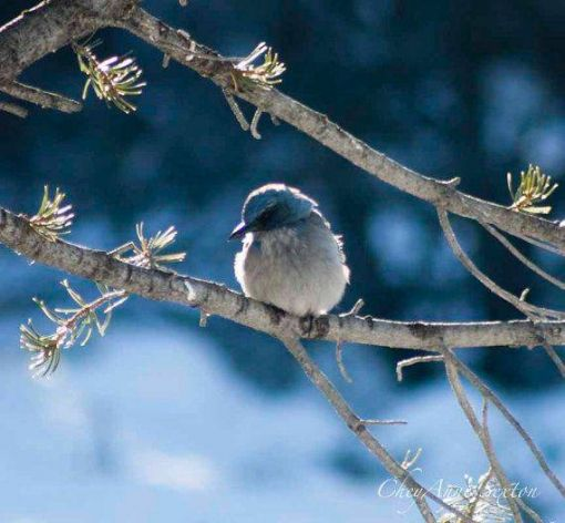 Chaco Canyon Christmas Bird Count
