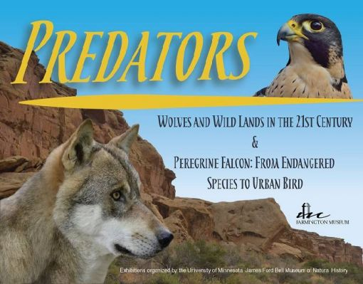 Wolves and Wild Lands Exhibit & Peregrine Falcon