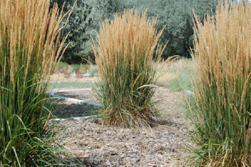 Herbs & Xeriscape Garden Tours