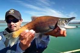 Kokanee salmon at Navajo Lake